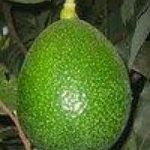 aguacate red