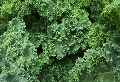 Ensalada de col kale