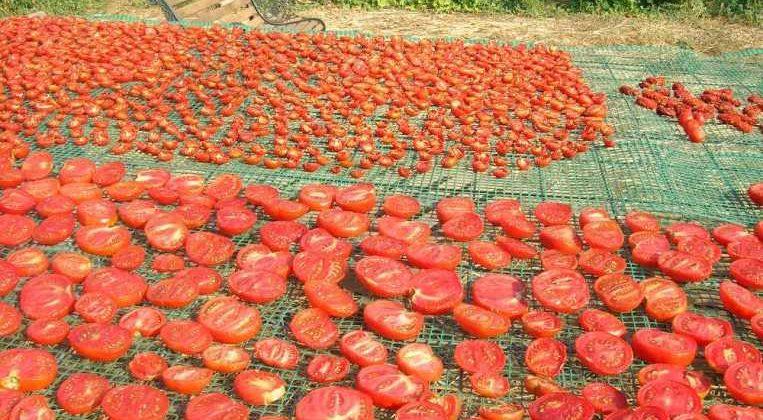 Cata-degustación conservas vegetales La Verdera