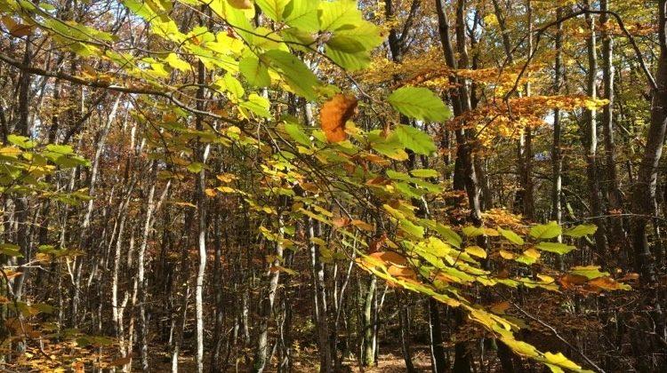 Bizcochitos del bosque para caminatas de otoño